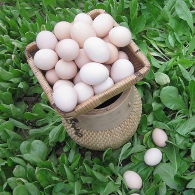 鹅蛋搅拌炒锅价格_鹅蛋搅拌炒锅厂家_鹅蛋搅拌炒锅图片_鹅蛋搅拌炒锅